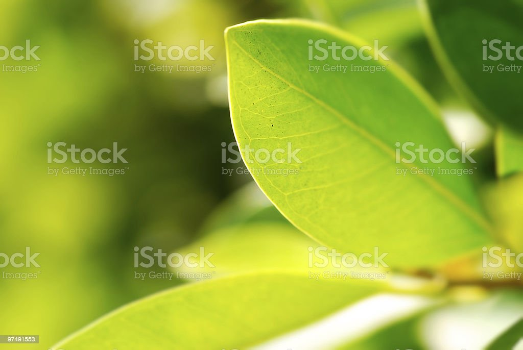 rich foliage royalty-free stock photo