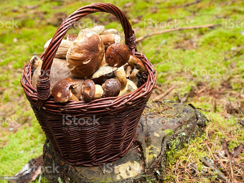 Rich harvest royalty-free stock photo