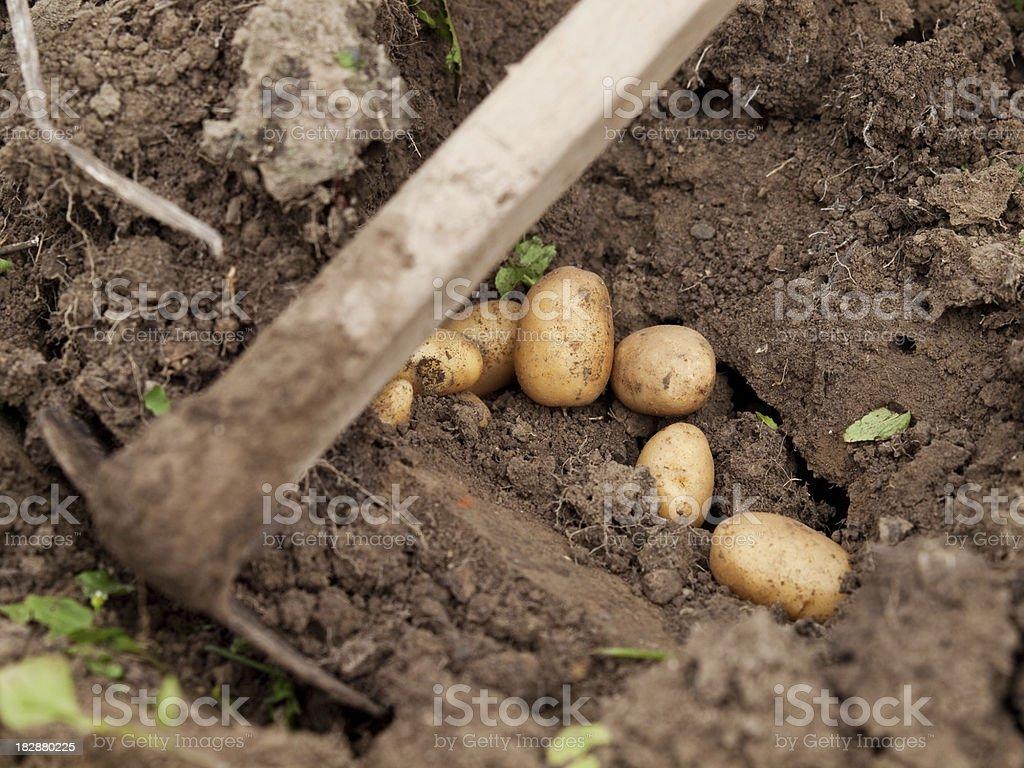 rich harvest stock photo