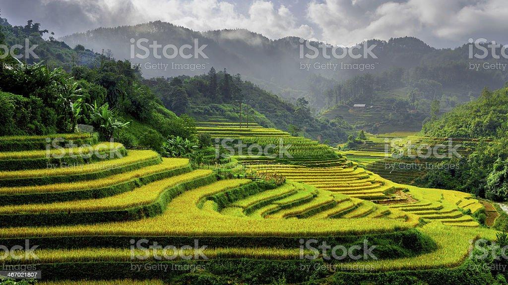 Rich rice fields in Mu Cang Chai Sapa Town Vietname stock photo