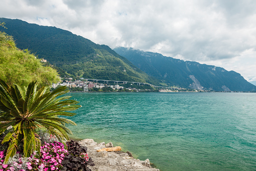 Rich summer vegetation on the shores of Lake Geneva (Lac Leman) in Montreux Riviera, Vaud, Switzerland
