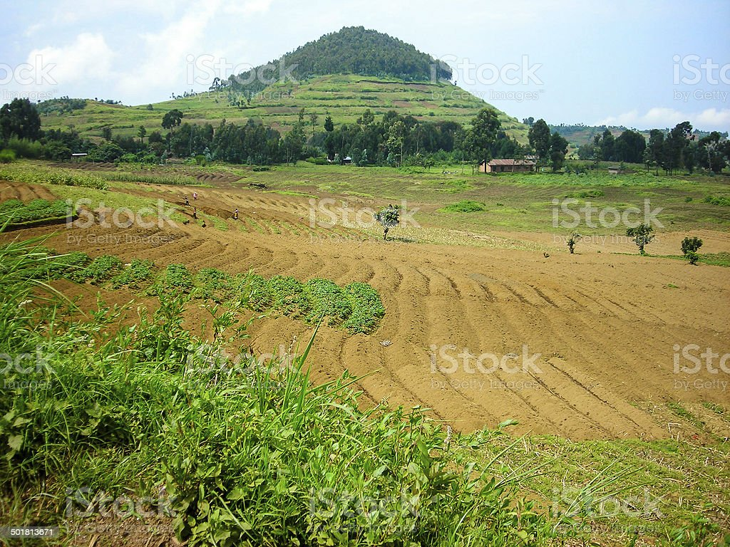 Rich Volcanic Agricultural Soils and Crops northwest Rwanda stock photo