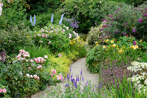 A richly planted English flower garden in high summer containing delphiniums, buddleia and roses.