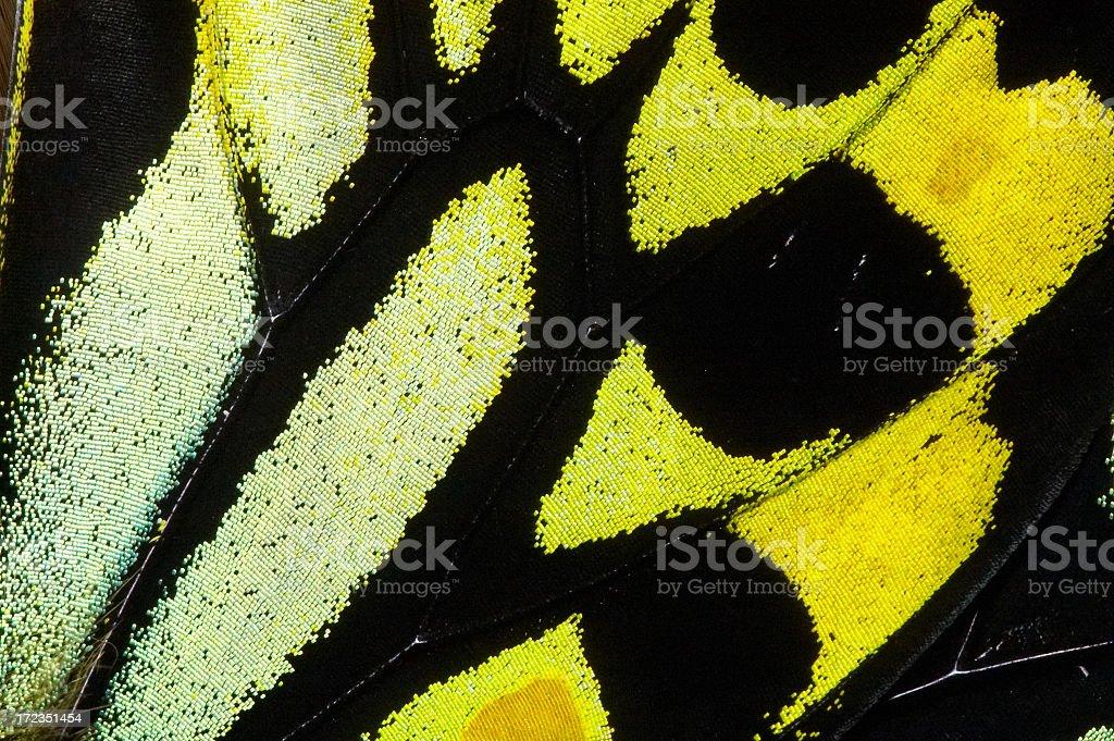 Richmond mariposa de alas gigantes foto de stock libre de derechos