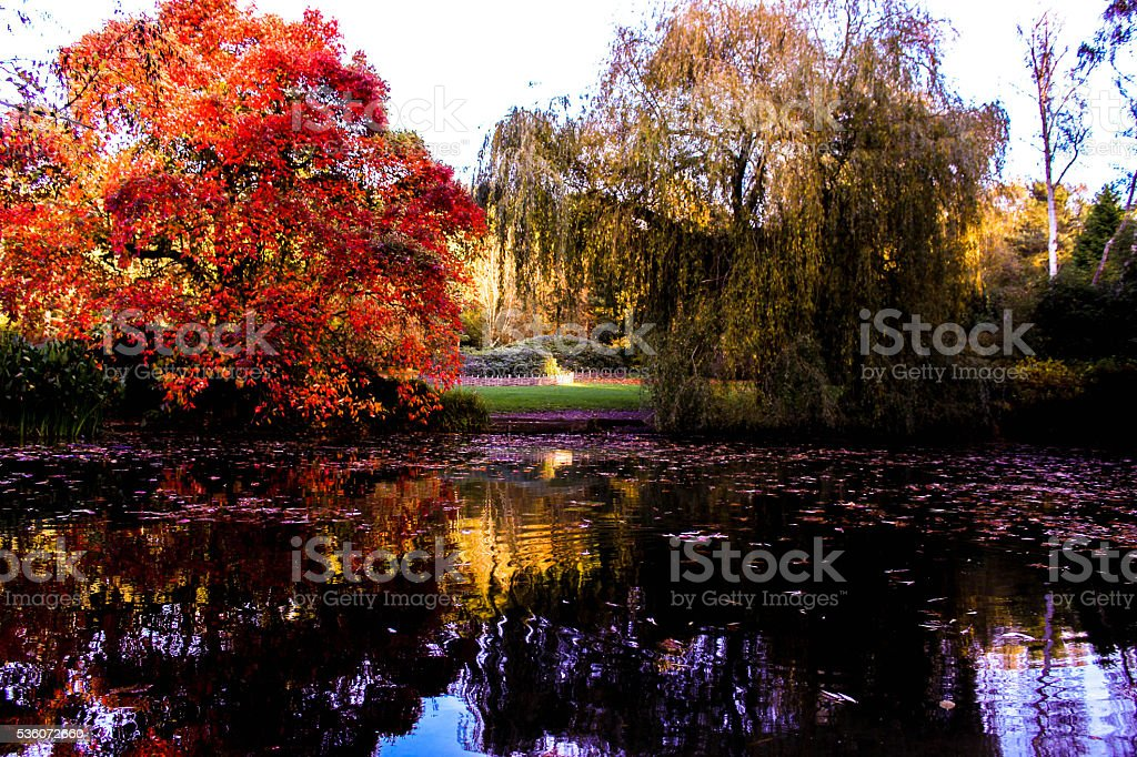 Richmond Park stock photo