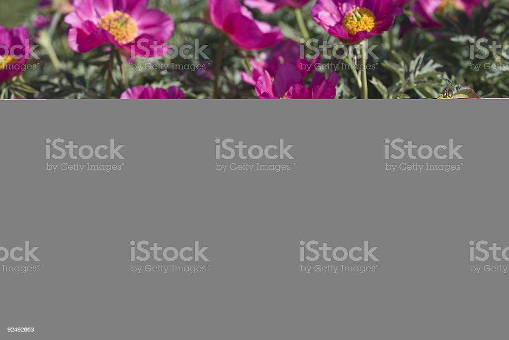 Riddarholmen Lizenzfreies stock-foto