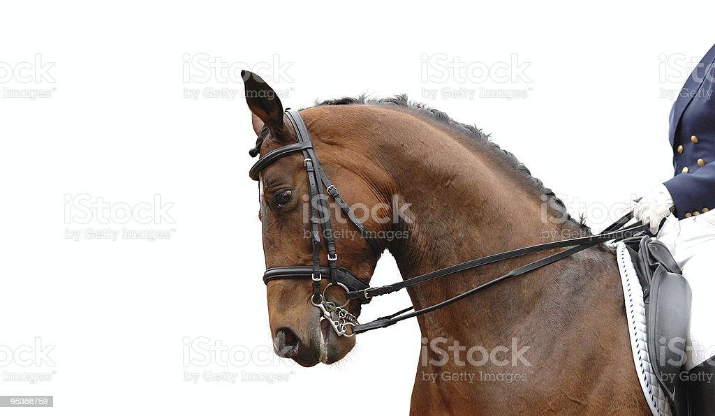 rider and horse royalty-free stock photo