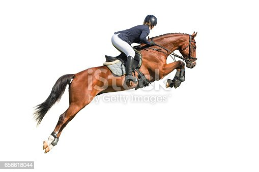 Rider jumper on a horse isolated on white background