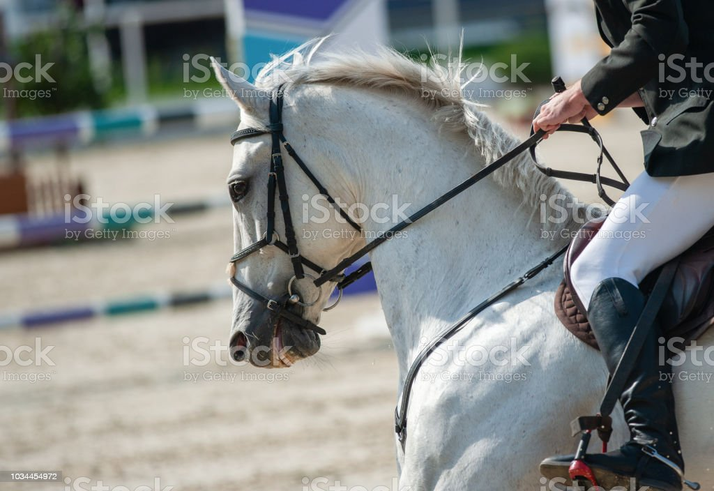 Rider On A White Horse On Show Jumping Stock Photo Download Image Now Istock