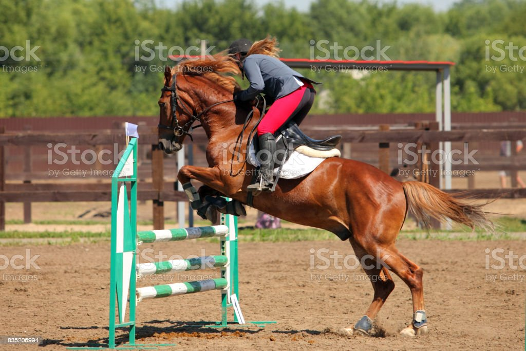 Rider On Chestnut Horse Jumping Over Oxer Stock Photo Download Image Now Istock