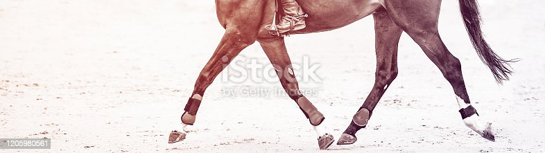 istock Rider on sorrel horse in jumping show, equestrian sports. 1205980561