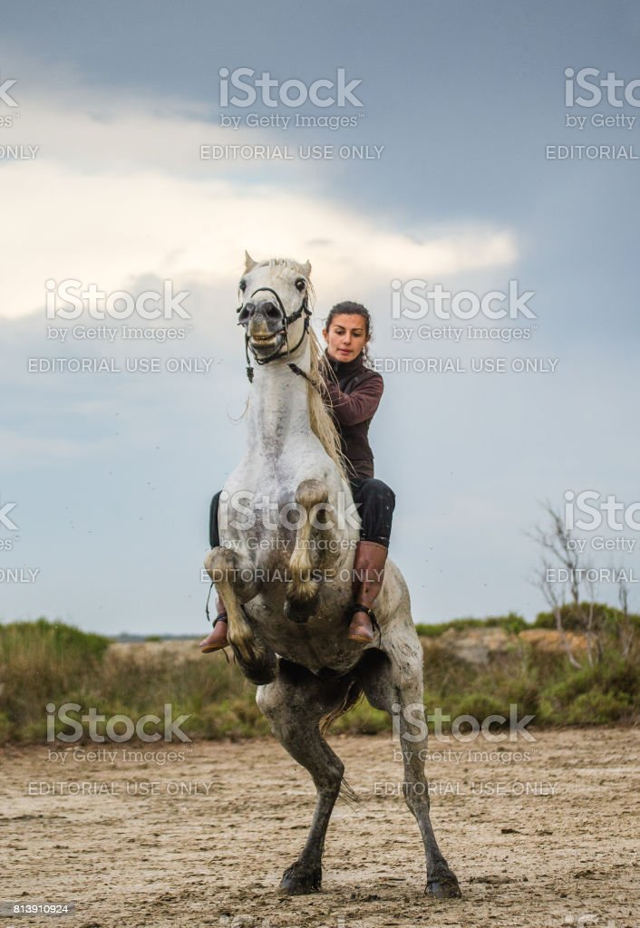 Rider on the White Camargue horse in Parc Regional de Camargue - Provence, France stock photo