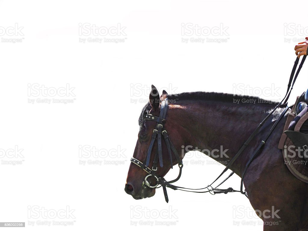 Rider rides a horse, isolated on a white background. stock photo