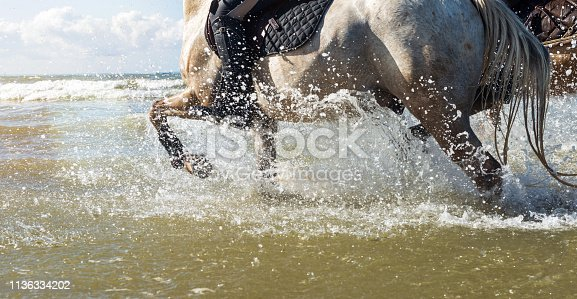 equestrian sport on the beach