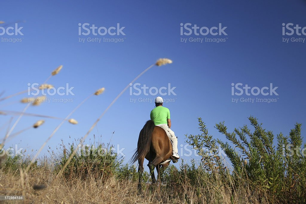 Riding a horse in the wild royalty-free stock photo