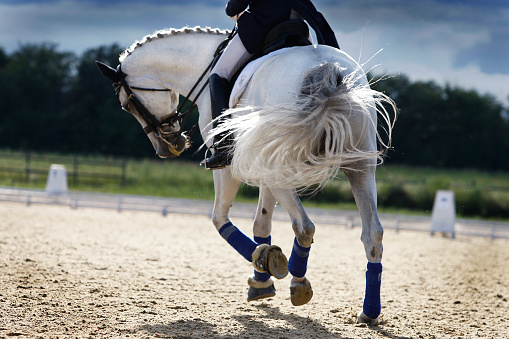 Riding a white horse in a corral