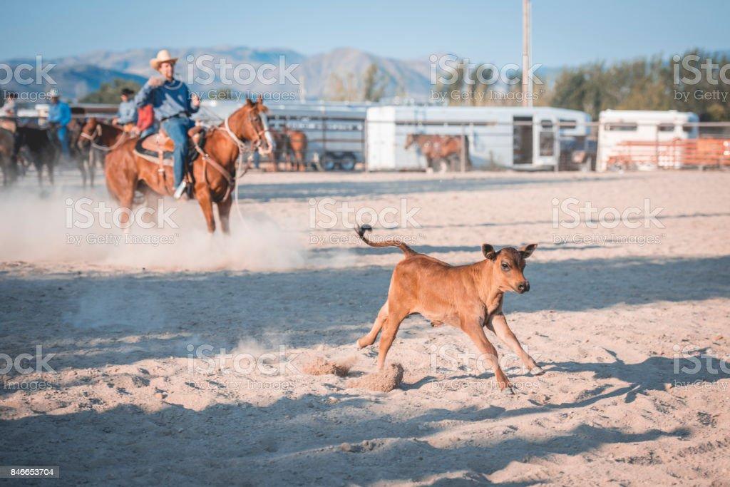 Riding adn steer roping stock photo
