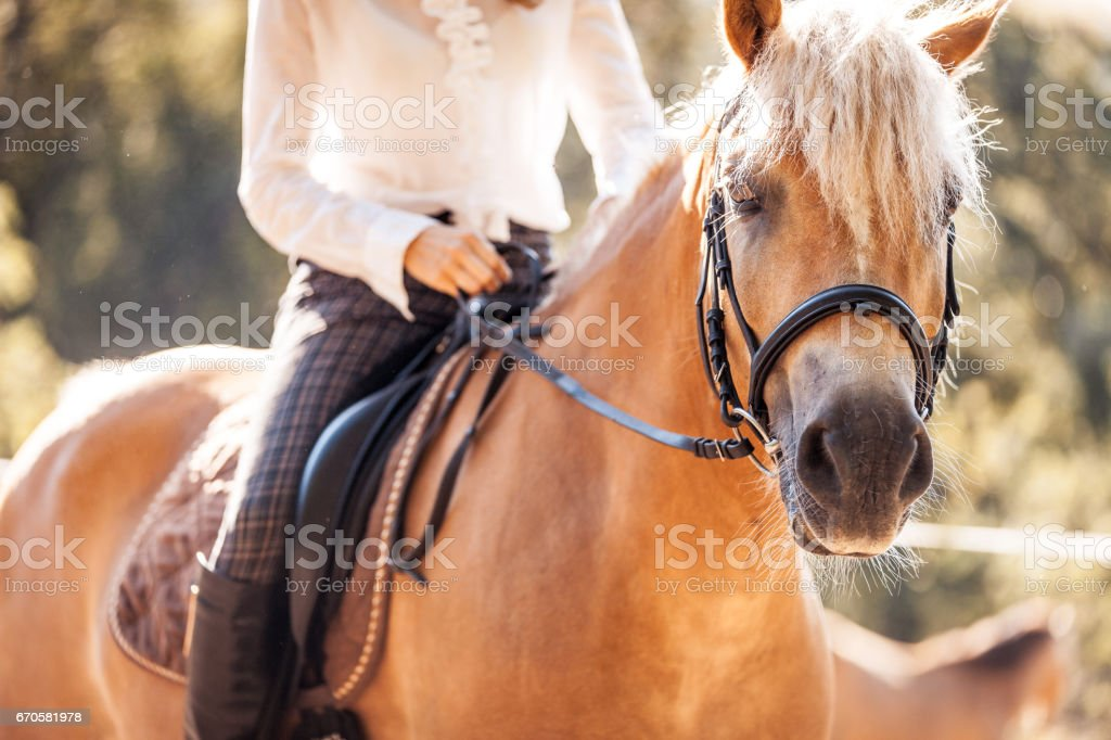 Riding and Petting the Horse stock photo