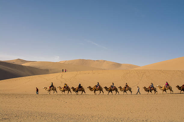 Riding camel Dunhuang,Gansu, China - October 11, 2014: Group of tourists are riding camels in the desert at Dunhuang City , China. This place is a part of silk road in the history. silk road stock pictures, royalty-free photos & images