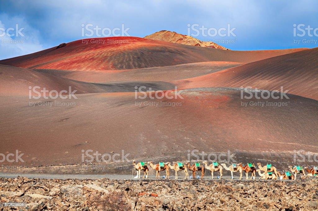 Kamele reiten warten auf Touristen im Nationalpark Timanfaya, Lanzarote, Kanarische Inseln. – Foto