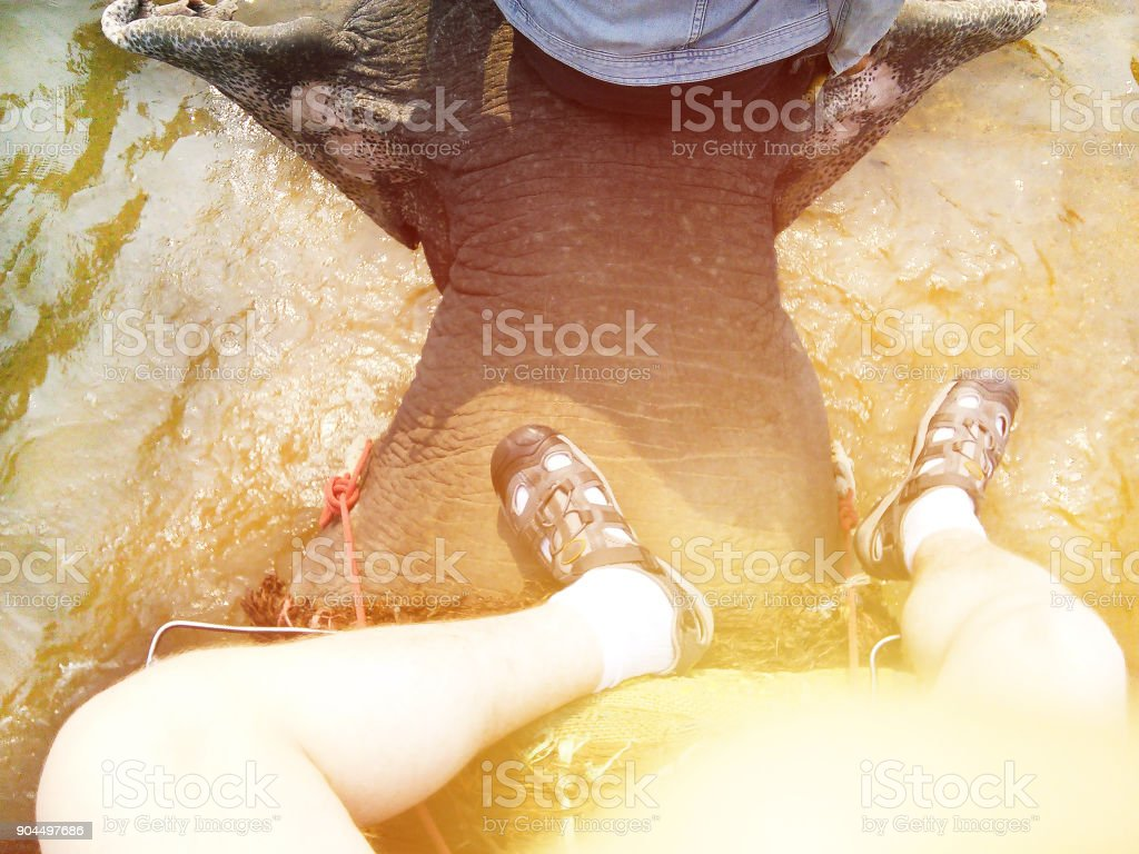 Riding elephant in water selfie top view stock photo
