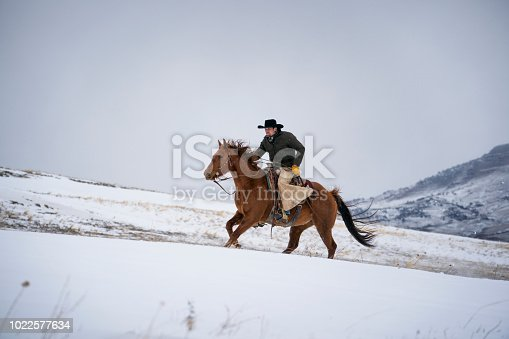Caucasian man in winter jacket, cowboy hat, leather chaps, cowboy boots and gloves rides  his quarter horse across the Absaroka Mountain Range  during a snow storm, Livingston, Montana, USA