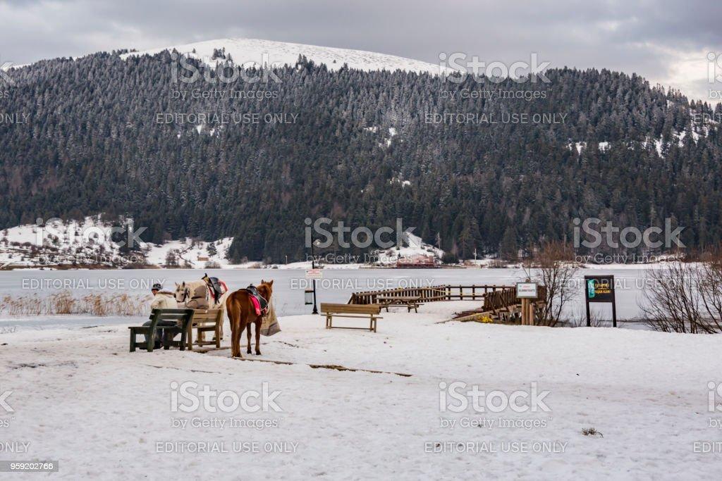 승마 말 및 Abant 호수, 볼 루, 터키에서 골키퍼 - 로열티 프리 0명 스톡 사진
