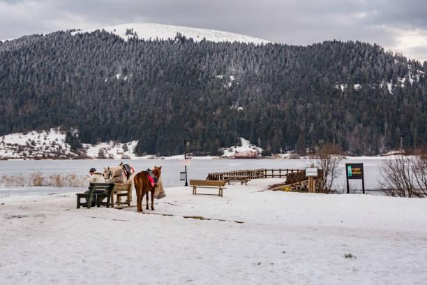 승마 말 및 abant 호수, 볼 루, 터키에서 골키퍼 - 볼루 뉴스 사진 이미지