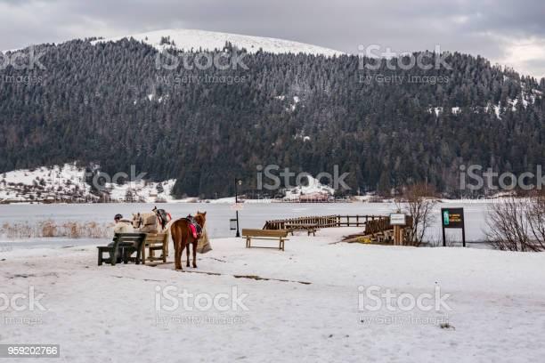 승마 말 및 Abant 호수 볼 루 터키에서 골키퍼 0명에 대한 스톡 사진 및 기타 이미지