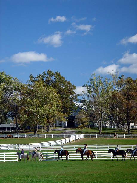 Riding Horses stock photo