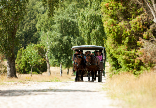 Riding in a horse carriage through the Lueneburger Heath