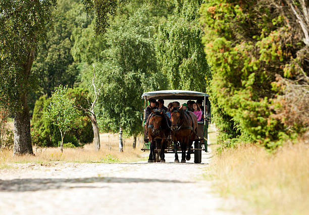 Riding in a horse carriage through the Lueneburger Heath Oberhaverbeck, Germany - August 11, 2012: A horse-drawn carriage carrying tourists through the Lueneburg Heath nature reserve. The Lueneburg Heath is a large area of heath, geest and woodland in northeastern part of the state of Lower Saxony in northern Germany. lüneburg stock pictures, royalty-free photos & images