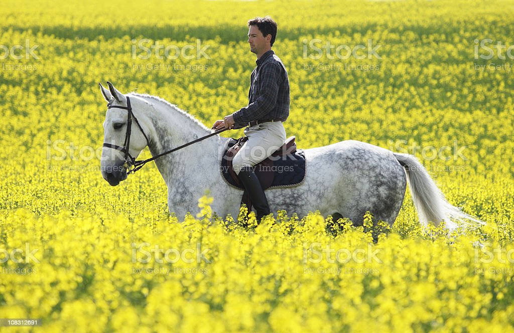 Riding in oilseed rape field royalty-free stock photo