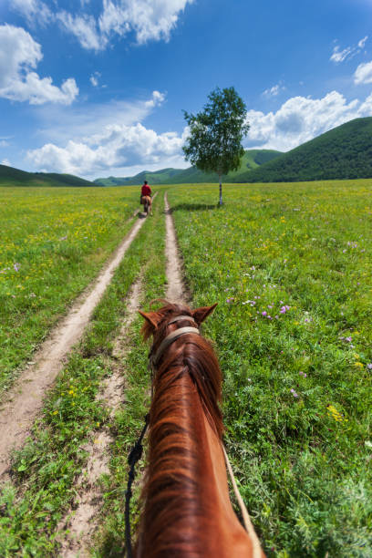 reiten auf den feldern - pferdezeitschrift stock-fotos und bilder