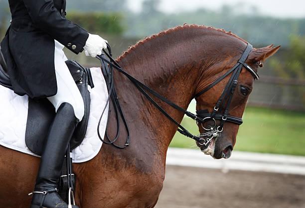 équitation dans la pluie - dressage photos et images de collection