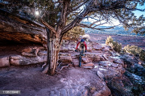 A man descends a series of rocky steps underneath a Cedar Tree on his mountain bike along the Horsethief Bench trail in the Kokopelli Trail System near Fruita Colorado.