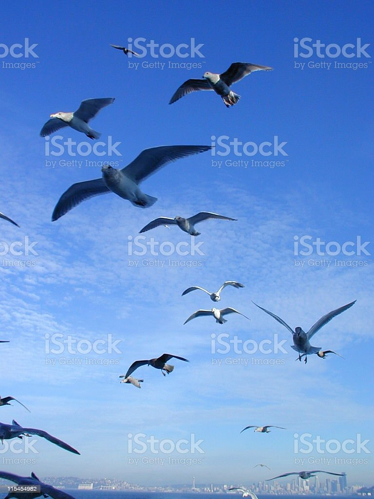 Riding the Ferry royalty-free stock photo