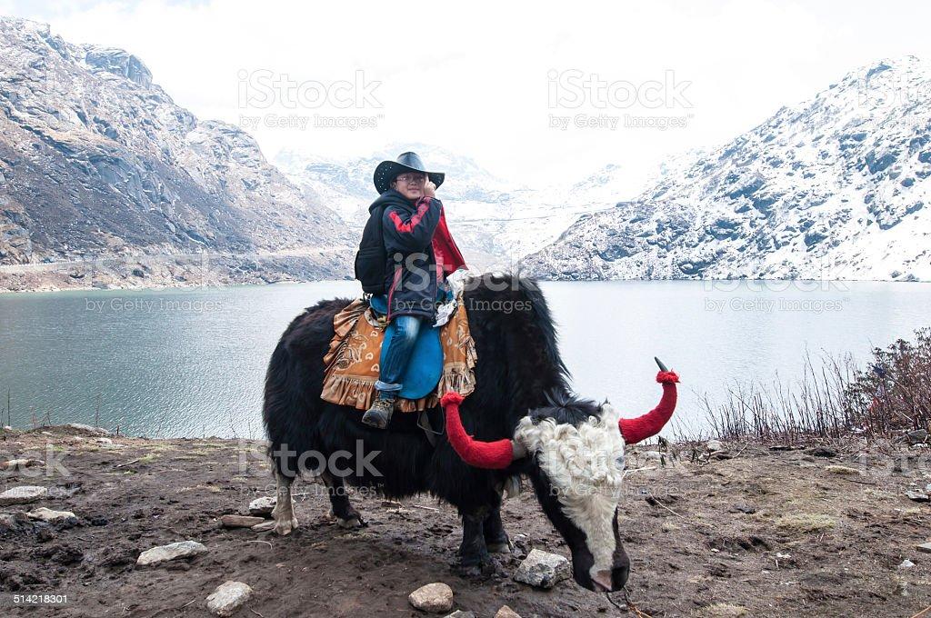 riding yak stock photo
