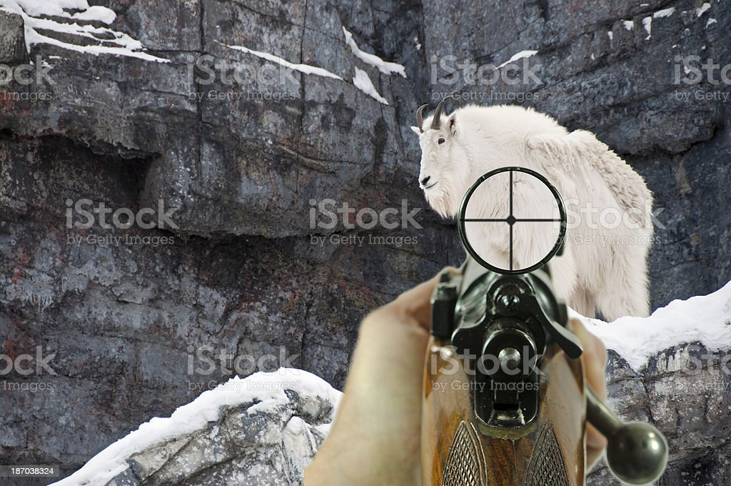 Rifle and Scope with Mountain Goat royalty-free stock photo