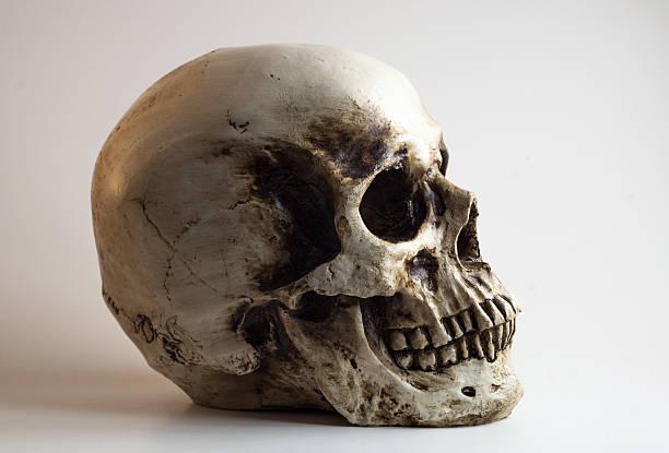 right facing skull shadow light profile stock photo