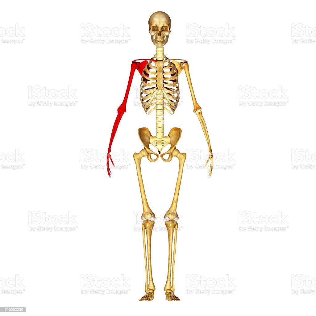 Erfreut Zweig Der Anatomie Fotos - Anatomie Von Menschlichen ...