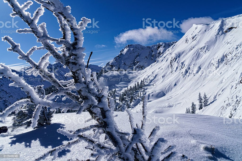 Rime Ice Hoar Frost on Tree with Mountain View stock photo