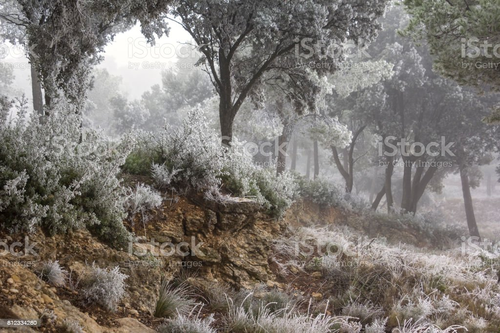 Rime is located on the trees and bushes stock photo
