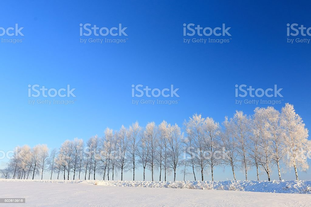 Rime to tree-lined streets and empty hills of Biei stock photo
