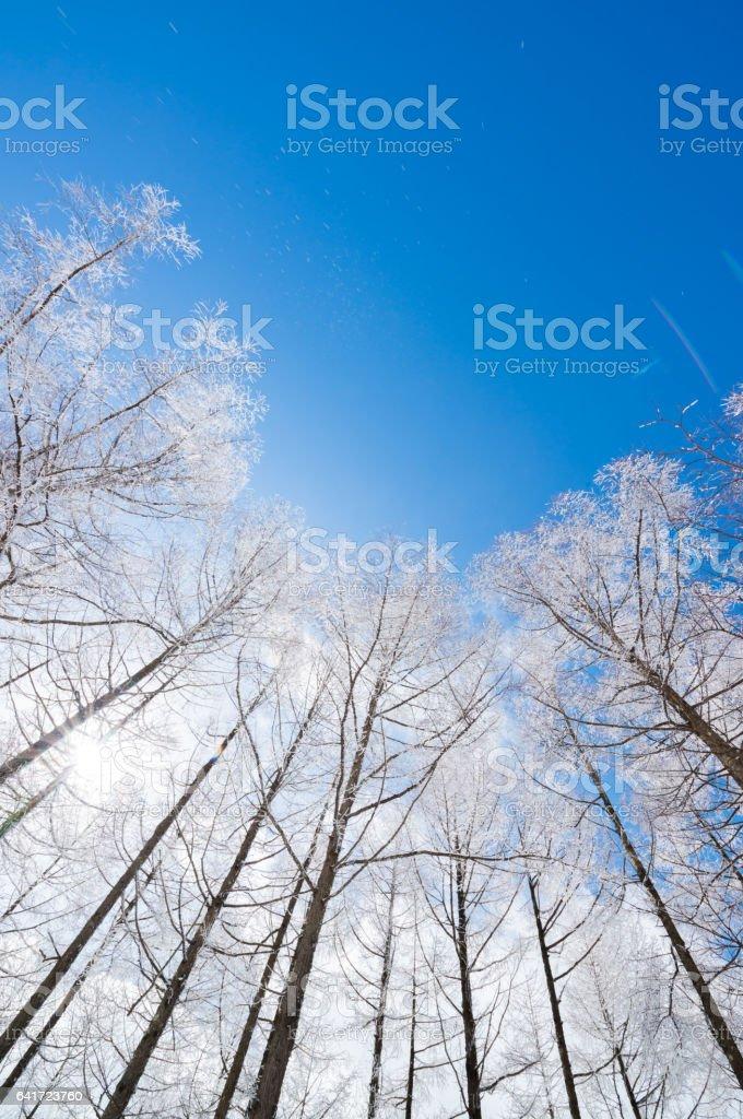 Rime Trees stock photo
