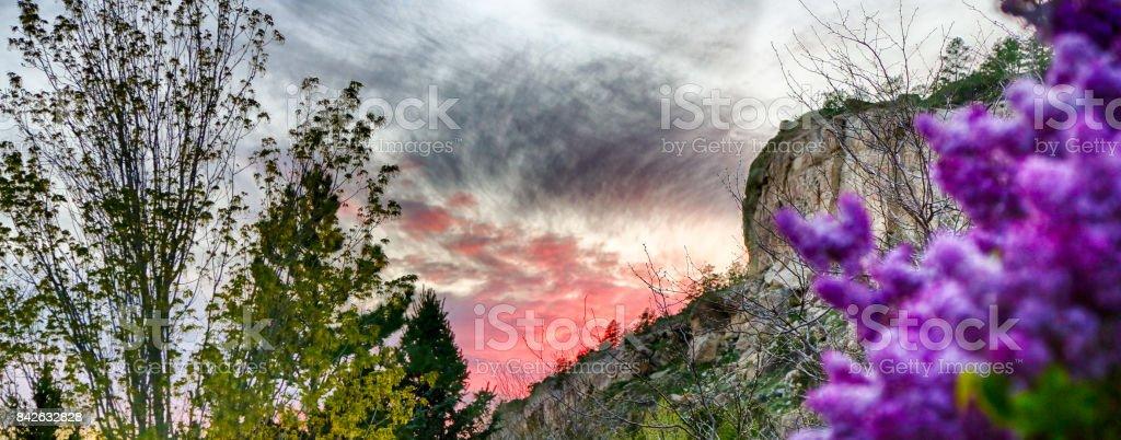 Rimrock Blooms stock photo