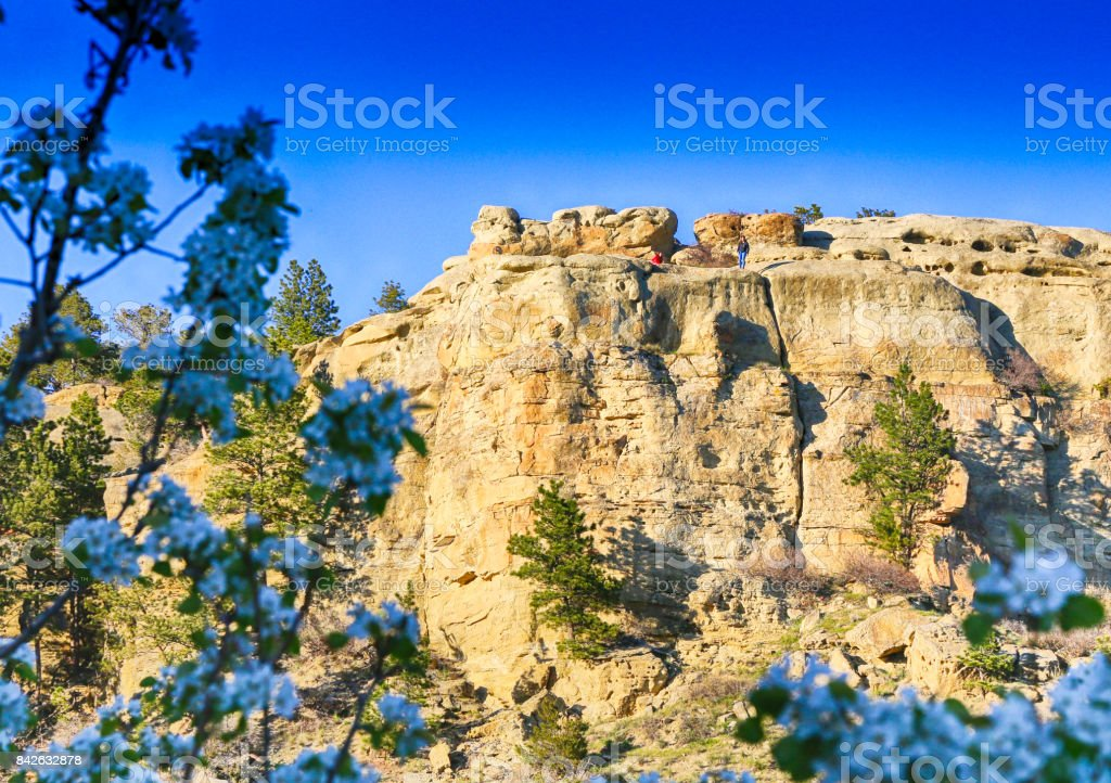 Rimrock Blooms stock photo