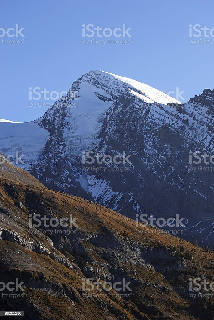 Rinderhorn royalty-free stock photo