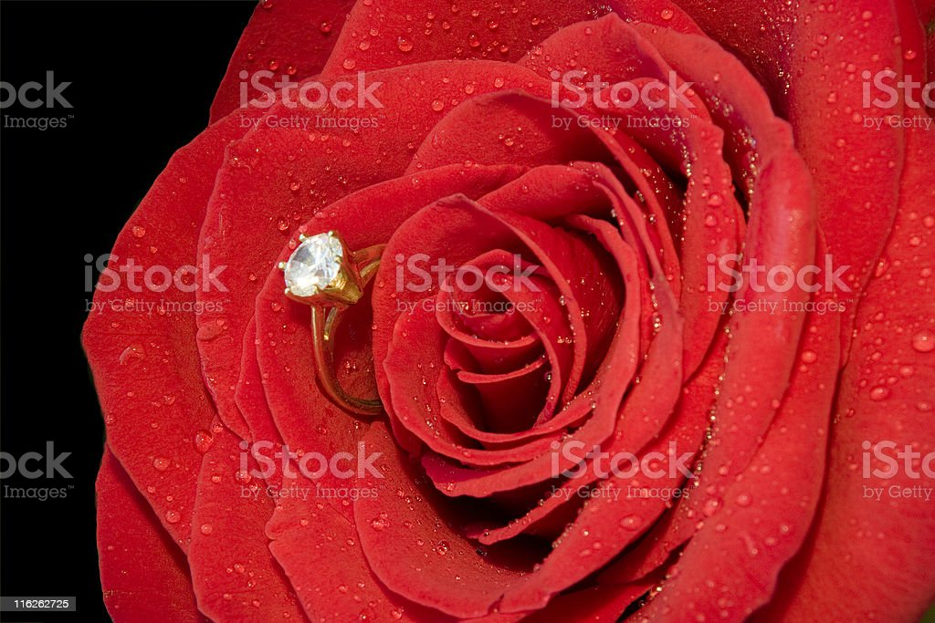Ring in Rose royalty-free stock photo