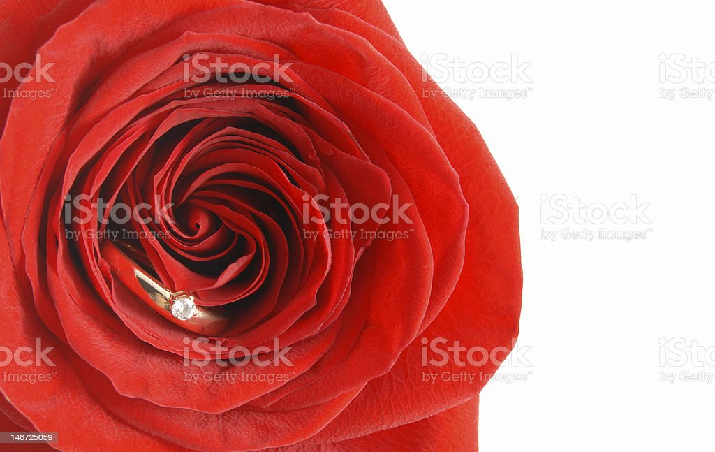 Ring in the rose royalty-free stock photo